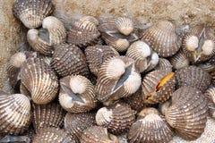 De verse van overzeese vertoning kokkelstweekleppige schelpdieren voor verkoop bij zeevruchtenmarkt of Thais straatvoedsel stock afbeeldingen