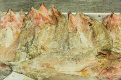 De verse vis is bewaarde bronnen Royalty-vrije Stock Afbeeldingen