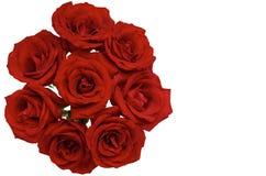 De verse vorm van de bloeiliefde van rode rozen stock foto