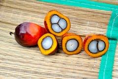 De verse vruchten van de oliepalm stock fotografie