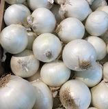De verse witte uien van de landbouwbedrijfoogst Stock Afbeelding