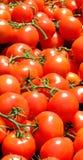 De verticaal van de tomaat Stock Afbeelding