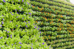 De verticale tuin van de bloemmuur Stock Foto's