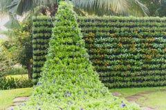 De verticale tuin van de bloemmuur Royalty-vrije Stock Afbeeldingen