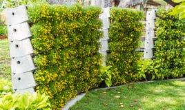 De verticale tuin van de bloemmuur Stock Fotografie