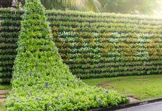 De verticale tuin van de bloemmuur Stock Afbeeldingen