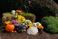 De Vertoning van de herfst Stock Foto