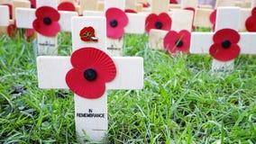 De vertoning van de herinneringsdag in de Abdij van Westminster Stock Fotografie