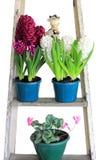 De vertoning van de hyacintbloem Stock Foto's