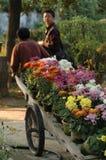 De vervoer tuinman-chrysant toont Royalty-vrije Stock Foto