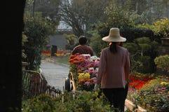 De vervoer tuinman-chrysant toont Stock Foto's