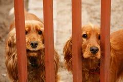 De Verwachting van honden Stock Foto's