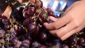 De verwerking die van de het huiswijn van het druivenfruit fruit verwijderen uit stam met naakte handen stock footage