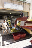 De verwerking van de Druiven in Collioure Stock Foto