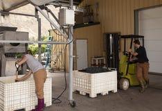 De verwerking van de Druiven van de Rode Wijn Royalty-vrije Stock Foto's
