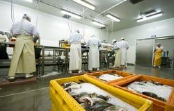 De verwerkingsvervaardiging van vissen stock foto's