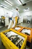 De verwerkingsvervaardiging van vissen stock afbeeldingen