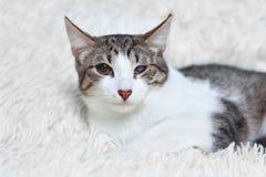 De verwonde kattenzieken, gered van stadsstraten, kijkt met wantrouwen en vrees royalty-vrije stock afbeelding