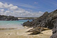 De verzorging van de zeeleeuw, San de cristobal Galapagos stock afbeelding