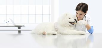 De veterinaire onderzoekshond, glimlachende dierenarts met verbrokkelt droog royalty-vrije stock foto