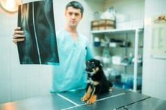De veterinaire specialist bekijkt röntgenstraal van de hond royalty-vrije stock afbeelding