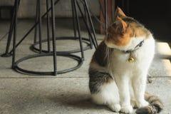De vette kat ziet terug eruit Het buitendeel van de glasdeur royalty-vrije stock foto