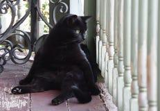 De vette zwarte kat zit op een portiek royalty-vrije stock afbeelding