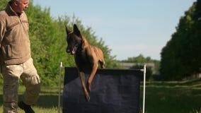 De vettige hond slaagt om over een hindernis te springen er niet in stock video