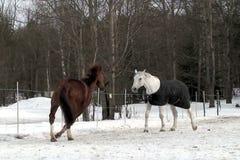 De video toont paard in openlucht in de paddock stock footage