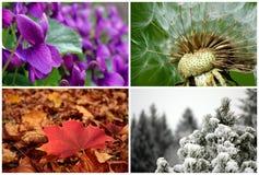 De vier seizoenen stock foto
