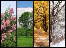 De vier seizoenenlente, de zomer, de herfst, de winter Royalty-vrije Stock Afbeelding