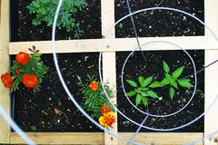 De vierkante Tuin van de Voet Stock Foto's