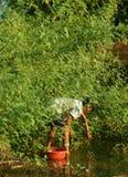De Vietnamese oogst dien dien bloem, sesban Sesbania Stock Fotografie