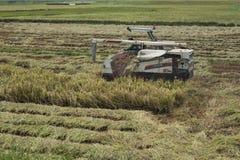 De Vietnamese rijst van de landbouwersoogst met a omhoog maaidorser stock fotografie