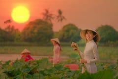 De Vietnamese vrouwen verzamelen de lotusbloemzonsondergang stock afbeelding