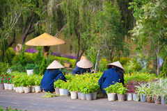 De Vietnamese vrouwen werken in tuin Royalty-vrije Stock Afbeeldingen