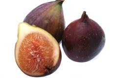 De vijgeboom van het fruit Stock Fotografie