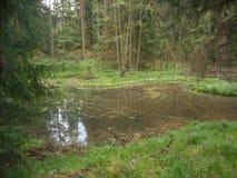 De vijver in het bos werd gemaakt van een bever stock foto's