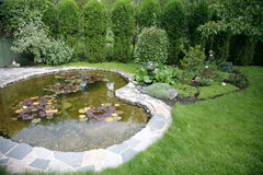 De vijver met water-lilys-geeft thuis in een werf water royalty-vrije stock foto's