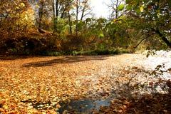 De vijver van de herfst. Royalty-vrije Stock Fotografie