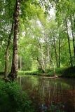 De vijver van de lente in bos Royalty-vrije Stock Foto's