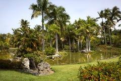 De Vijver van de palm royalty-vrije stock afbeeldingen