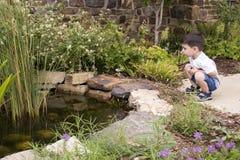 De Vijver van de tuin Stock Foto's