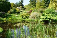 De vijver van de tuin Royalty-vrije Stock Foto's