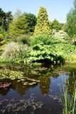 De Vijver van de tuin Royalty-vrije Stock Afbeelding
