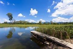 De vijver van het moerasland bij blauwe hemel in Hongkong royalty-vrije stock foto