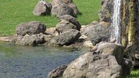 De Vijver van het rotsenwater en Cascade stock footage