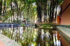 De vijver van le jardin DE Marjorelle Stock Foto's