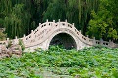 De vijver van Lotus Stock Foto