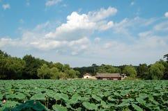 De vijver van Lotus Stock Foto's
